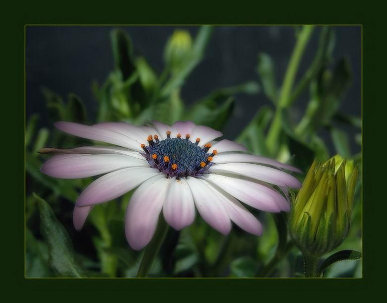 صور ورود , صور ازهار جميله
