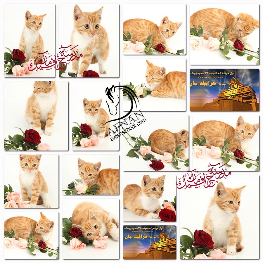 ستوك فوتو قطه كيوت مع الورد لتصاميم كروت المناسبات والاعياد عاليه الجوده jpg