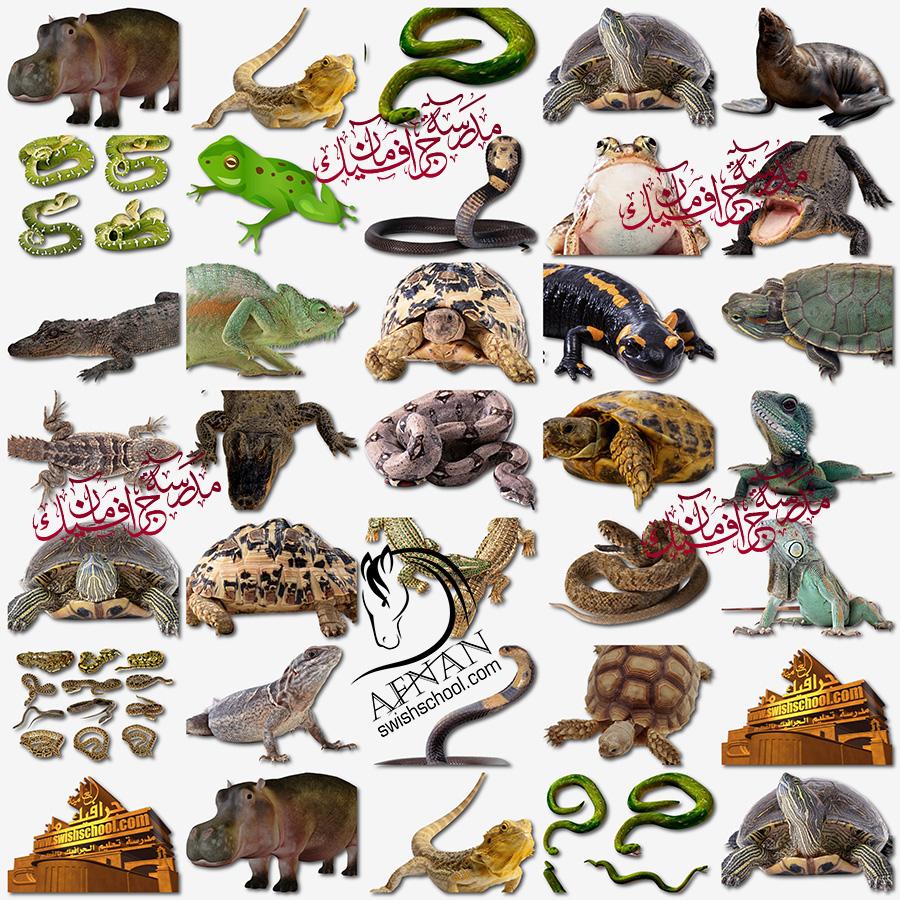 صور مقصوصه حيوانات برمائيه وزواحف و ضفادع وسلاحف وتماسيح وتعابين png