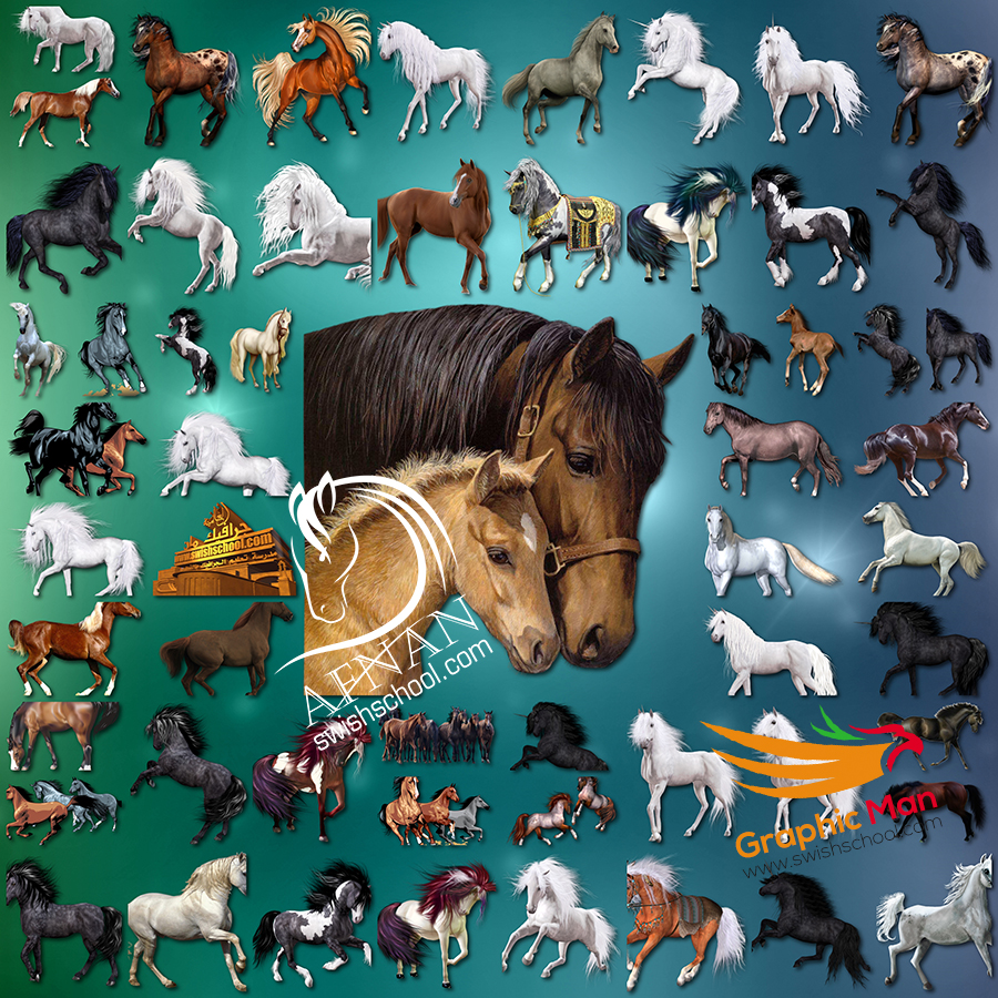 كليب ارت خيول وفرس unicorns بدون خلفيه جاهزه لتصاميم الفوتوشوب png