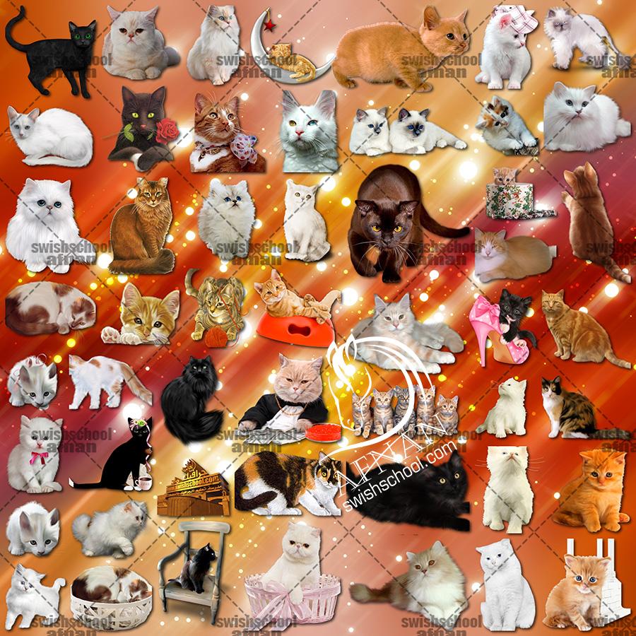 سكرابز قطط كيوت للفوتوشوب png