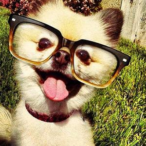 صور حيوانات سيلفي - قطط selfie