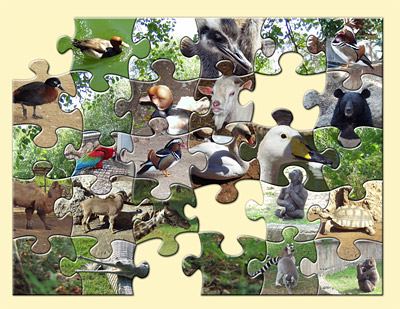 فلتر فوتوشوب لتقطيع الصور على شكل لعبه البازل AV Bros Puzzle