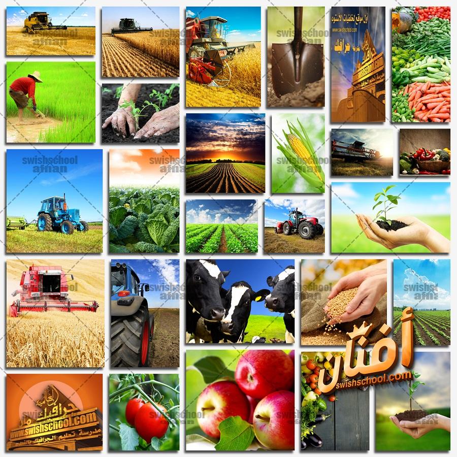 صور عن الزراعه عاليه الدقه - ستوك فوتو العاملون في الزراعة وتربية الحيوانات jpg