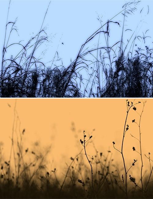 فرش اعشاب, فرش فوتوشوب عشب, فرش نبات شجر