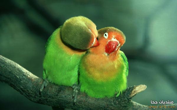 صور عشق 8 صور حب ، صور حب رومانسيه ، اقوى صور عشق و غرام Love images