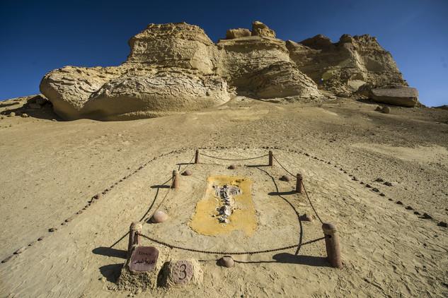 متحف وادي الحيتان 2 تعرف على متحف وادي الحيتان المصري