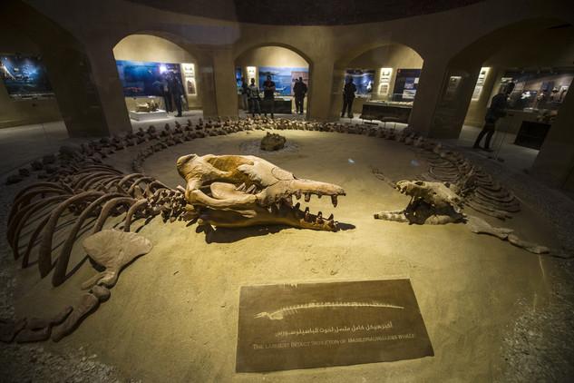 متحف وادي الحيتان 3 تعرف على متحف وادي الحيتان المصري