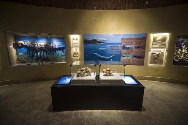 متحف وادي الحيتان 4 تعرف على متحف وادي الحيتان المصري