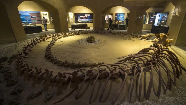 متحف وادي الحيتان 7 تعرف على متحف وادي الحيتان المصري