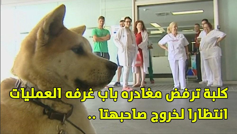 كلبه وفيه كلبه ترفض مغادره باب غرفه العمليات انتظارا لخروج صاحبتها