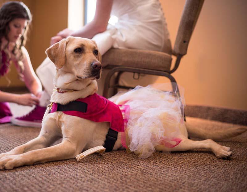 wedding dress 442433 شوف لك كلبه .. صور