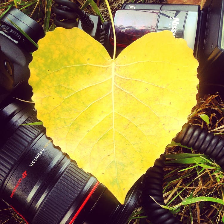 صور قلوب رومانسيه 2 صور قلوب رومانسيه للعشاق