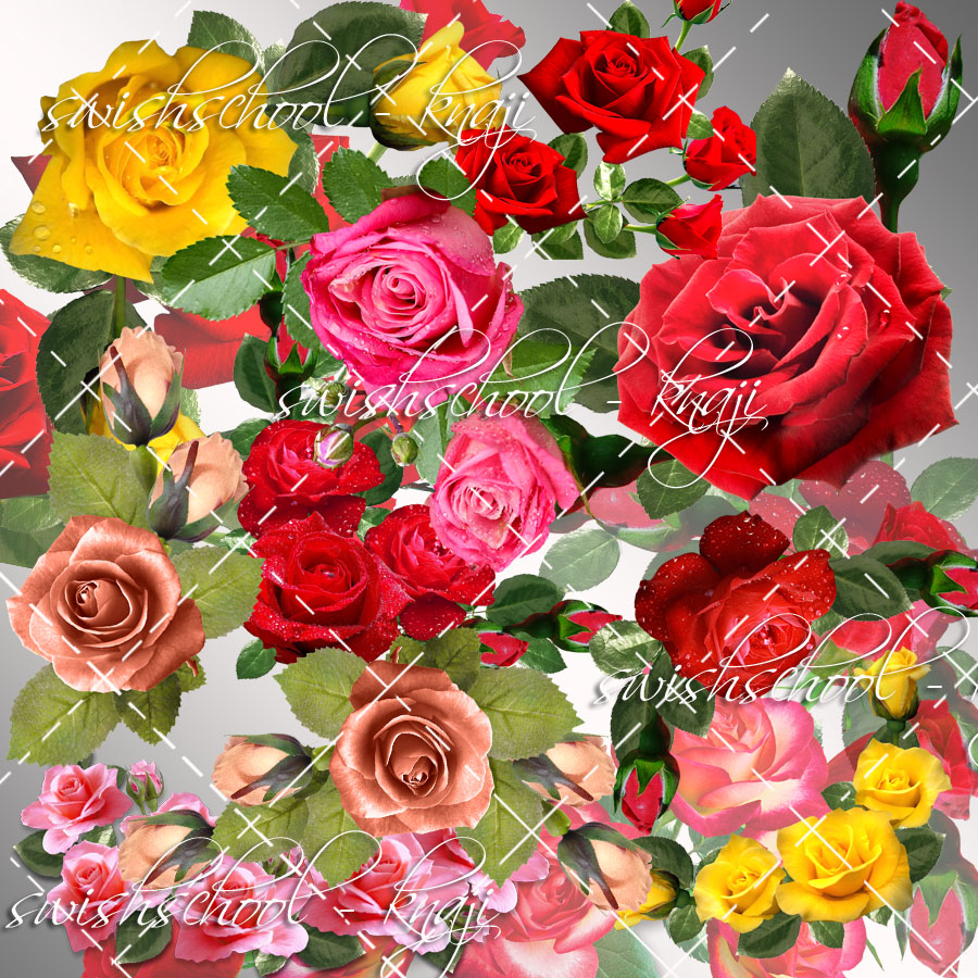 اجمل الورود بالوان متعدده جوده عاليه دون خلفيه