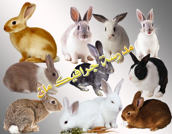 صور ارانب رائعه مفرغة الخلفيه 1