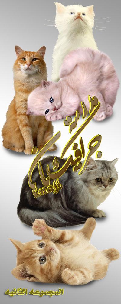 المجموعه الثانيه من اجمل القطط