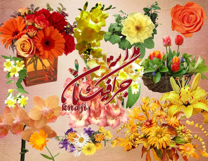 المجموعه الخامسه من اجمل الزهور والورود