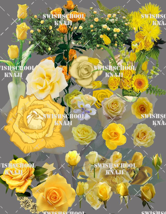 مجموعه رائعه من الورد الاصفر دون خلفيه وجوده عاليه