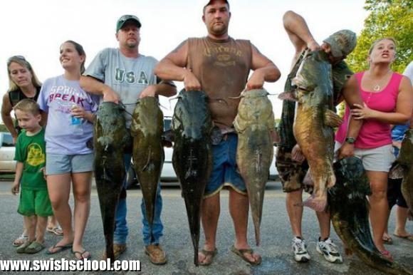 صور أكبر الاسماك حجماً اكبر سمكة