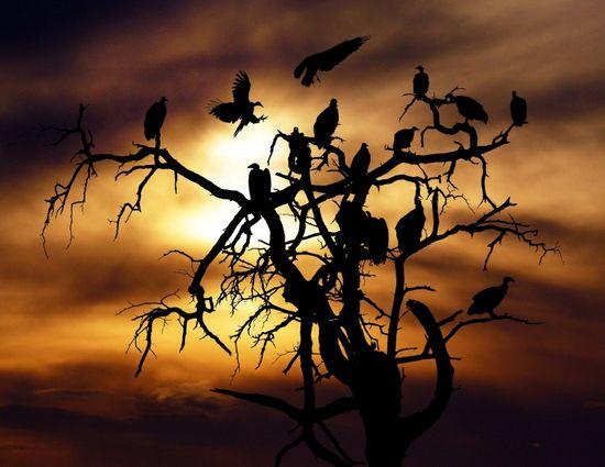 اروع صور للخيال و الظل  (المجموعة الثانية )