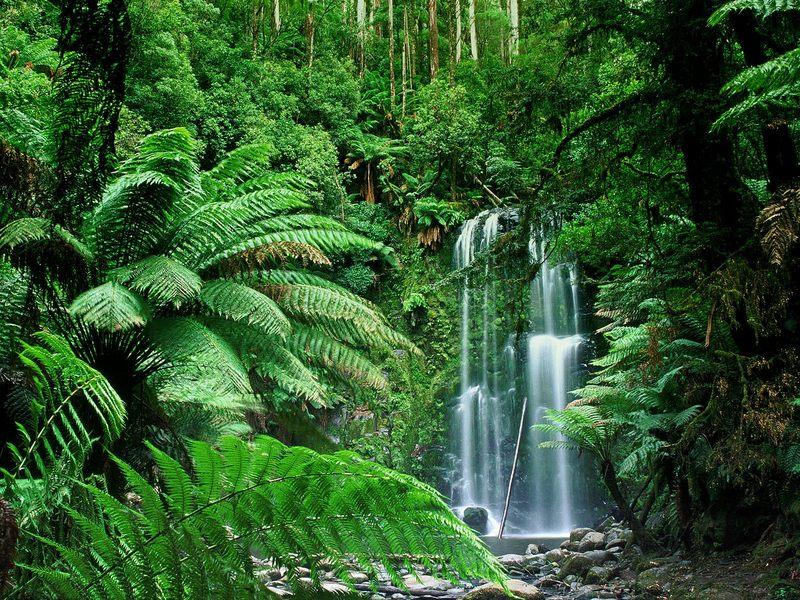 رحله جميله الى استراليا Australia a world of beauty