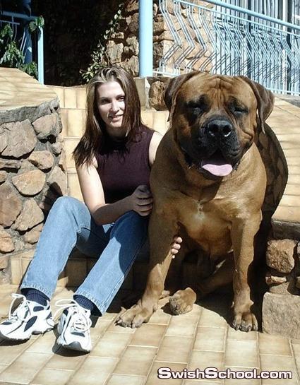 أكبر كلب في العالم صوره غريبه جدا 2011
