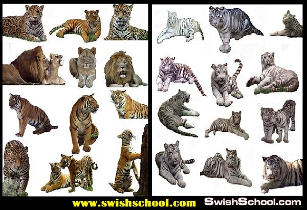 ملفات مفتوحه لنمور واسود Tiger and lion  PSD