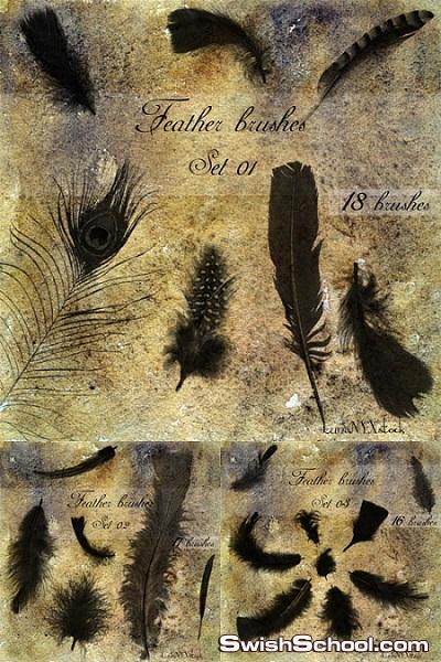 فرش ريش حقيقي للفوتوشوب 2012 Feathers Brushes