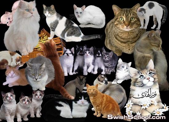 خلفيات قطط وقطاقيط عاليه الجوده لمحبين القطط