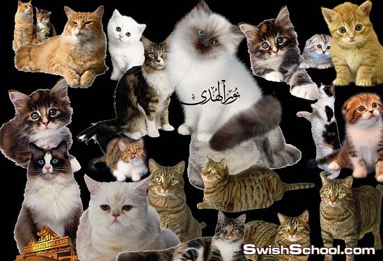 50 صوره مقصوصه لقطط وقطاقيط كانهم حقيقي لمحبين القطط  Cats and Kittens PNG