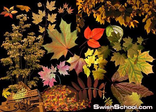 صور مقصوصه لاشجار واوراق شجر الخريف المتساقط Autumn leaf fall