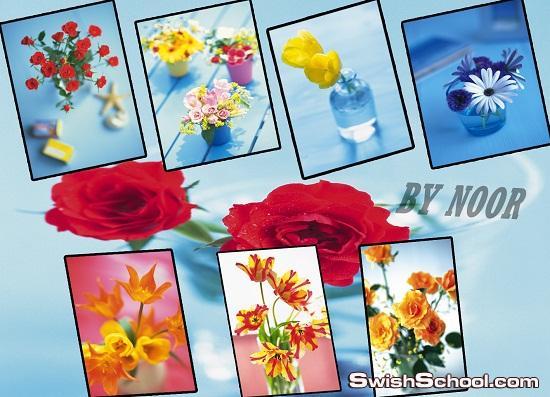 اجمل خلفيات الزهور عاليه الجوده للدذاين
