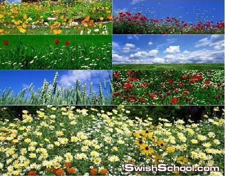 40 خلفيه بانوراما لزهور خلابه عاليه الجوده