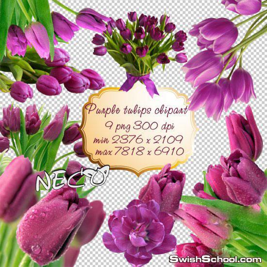 اجمل الصور المقصوصه لزهور التيوليب Purple Tulips clipart PNG