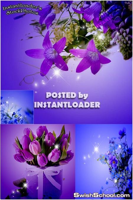 خلفيات زهور البنفسج عاليه الجوده للتصميم