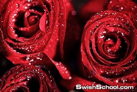 خلفيات رومانسيه باللون الاحمر الجميل مع قلوب وزهور رائعه للتصميم