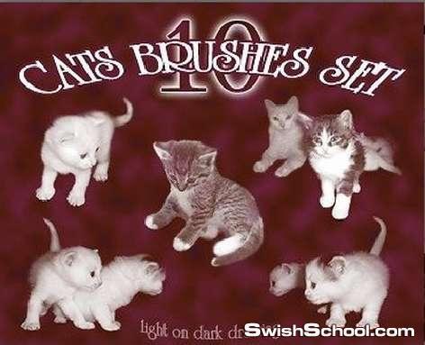 صور مقصوصه لقطط لطيفه وكيوت للبنوتات والاطفال , سكرابز قطط , صور عاليه الجوده