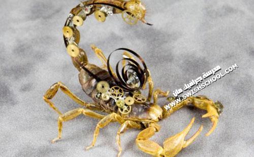 تحويل الحشرات لتحف