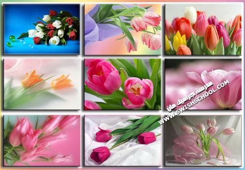خلفيات زهور , صور ورد , صور زهور التيوليب . صور بوكيهات ورد
