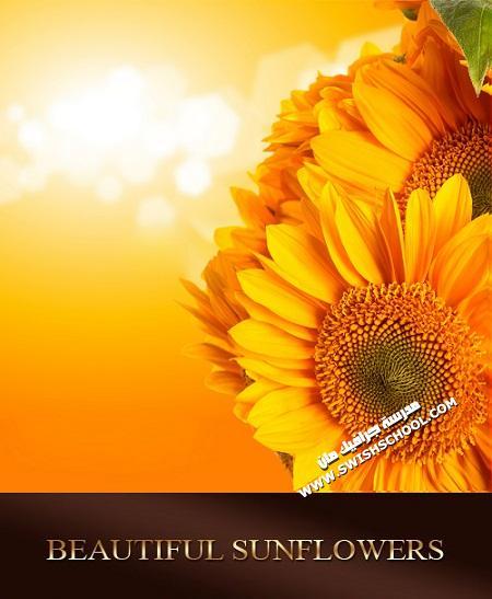 خلفيات زهور عباد الشمس الرائعه للتصميم 2012