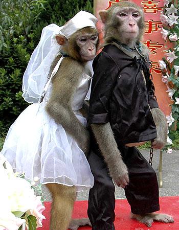 زواج شباب المدرسه الكل يبارك