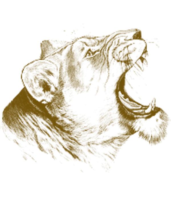 فرش اوراق قديمة وحيوانات مرسومة جديدة 2015