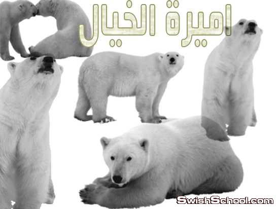 فرش دببه , دببه , دب , كليب ارت , دب قطبي , الدب , حيوانات الدب , رسم , صور مقصوصه دببه, صور مقصوصه