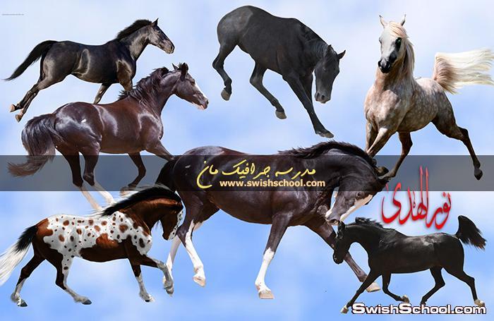 صور جرافيك خيول حقيقيه بدون خلفيه لتصاميم الفتوشوب png