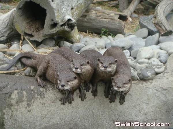 حديقة حيوان أورانا في نيوزيلندا مغامره تستحق التجربه