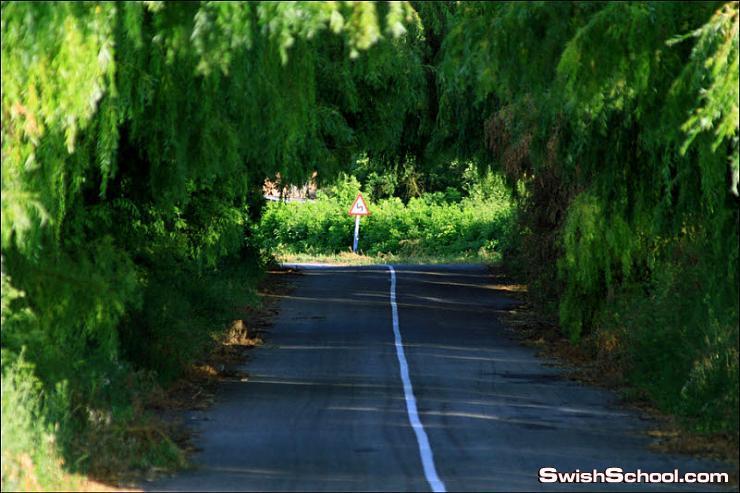 صور اجمل انفاق الاشجار - مناظر ساحره تبهج العين