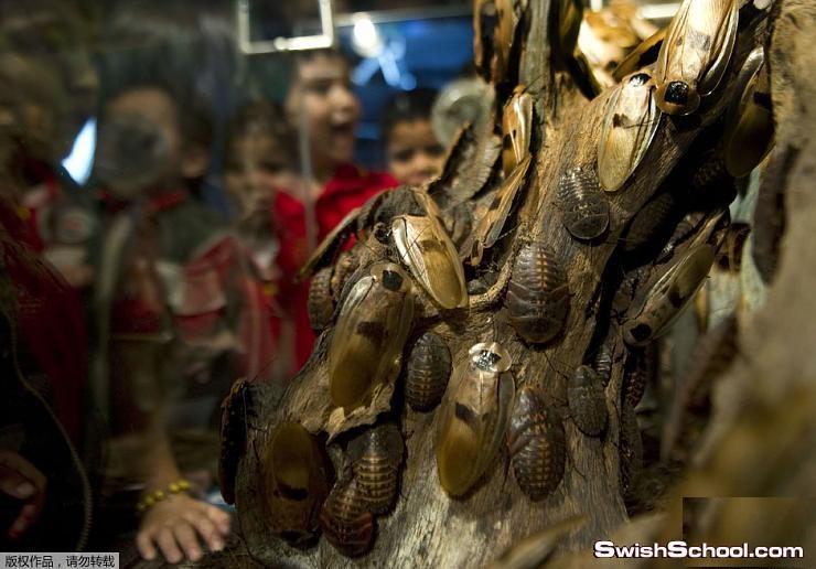 خبر عاجل تم افتتاح معرض للصراصير بكولومبيا