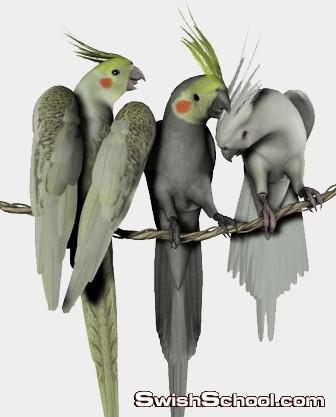 صور مقصوصه جميع انواع وفصائل الطيور , ببغاء , عصفور الجنه , غربان , طيور داجنه , نسور , صقور , بط