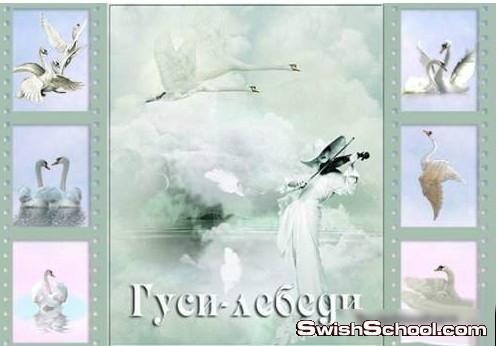 صور مقصوصه طيور البجع , كليب ارت طيور البجع , طيور البجع , طائر البجع , طيور البجع للافراح