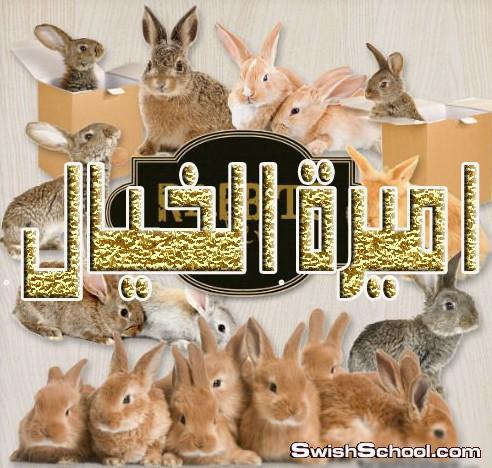 صور ارانب , صور مقصوصه ارانب , ارنب , ارانب , كيوت , صور مقصوصه , سكرابز , حيوانات